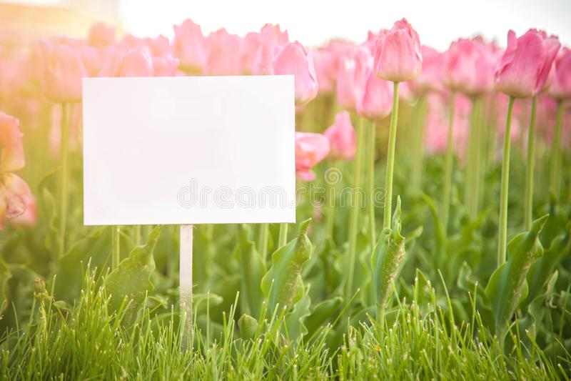 Placas da disposição no fundo das flores foto de stock royalty free