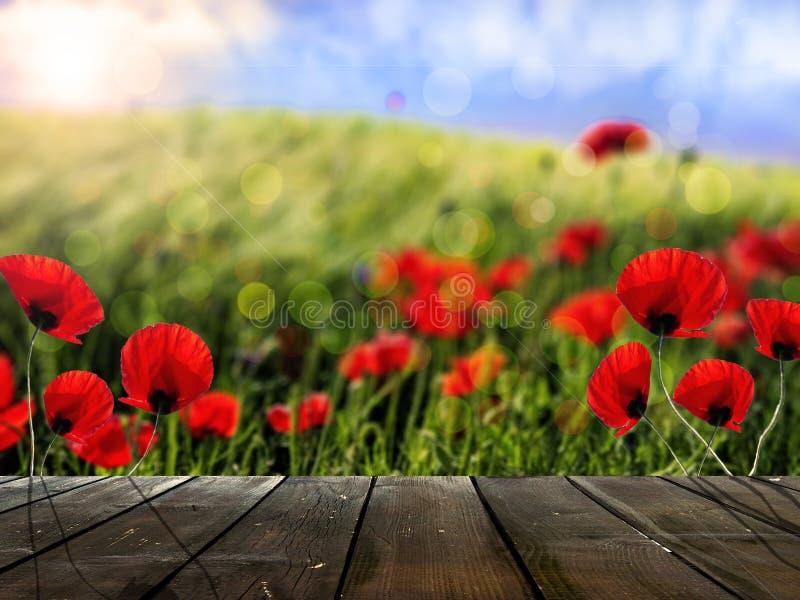 Placas de madeira rústicas na frente das flores do campo e da papoila de trigo imagem de stock royalty free