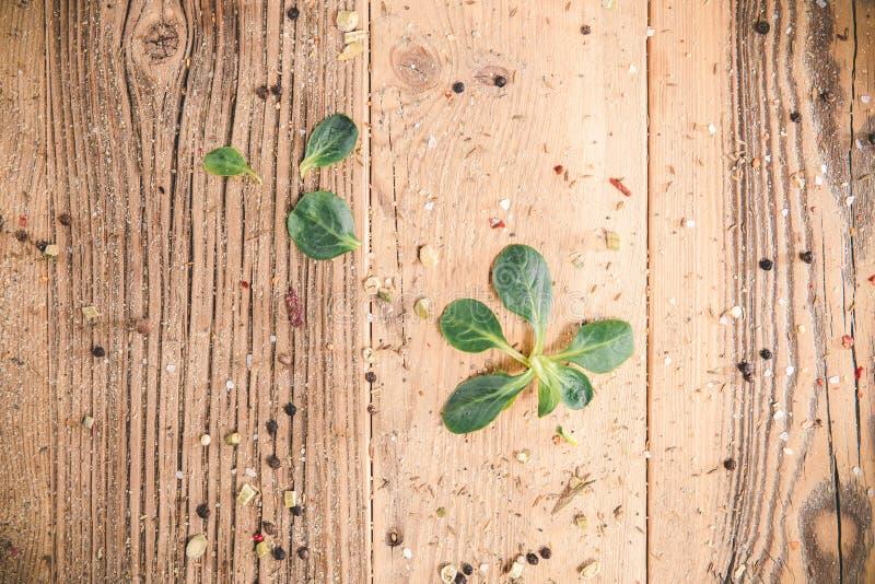 Placas de madeira vazias com especiarias e plantas fotos de stock