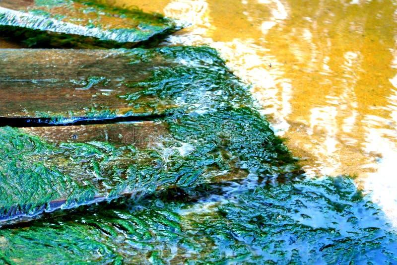 Placas perto do rio coberto de vegetação com o musgo fotografia de stock
