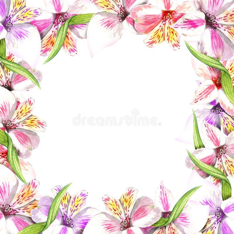 Place d'ornement de fronti?re de vue Fleurs botaniques florales de bouquet rose d'alstroemeria Wildflower sauvage de feuille de r illustration de vecteur