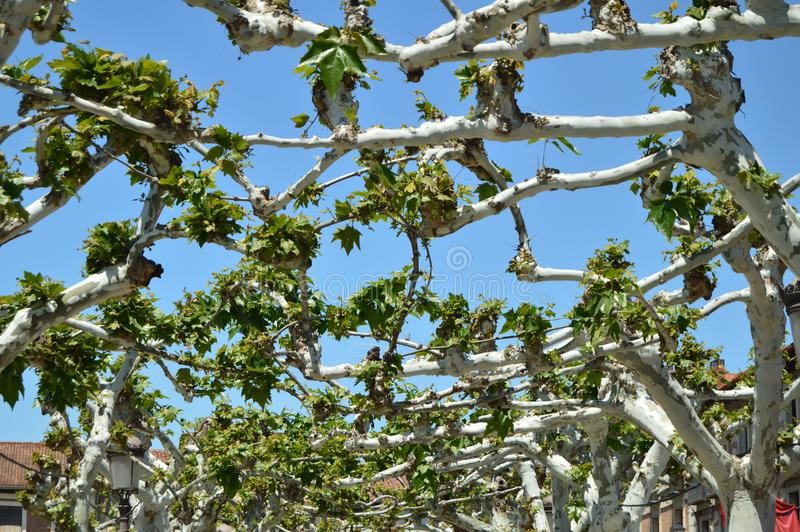 Place de Cervantes avec un certain beau lieu de naissance entrelacé d'arbres de Miguel De Cervantes Histoire de voyage d'architec photo libre de droits