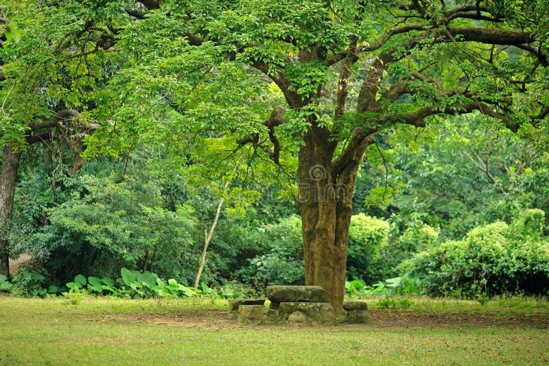 Place de reste sous le grand arbre images stock