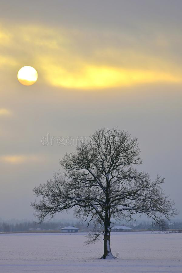 Lithuanian landscape . Winter afternoon . stock images