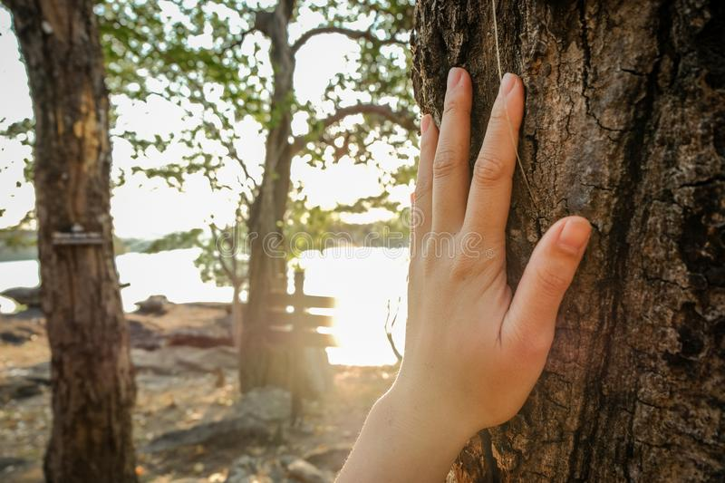 Placed on the trunk of a big tree with fingers extended, symbolizing the connection between humans and nature. stock photos