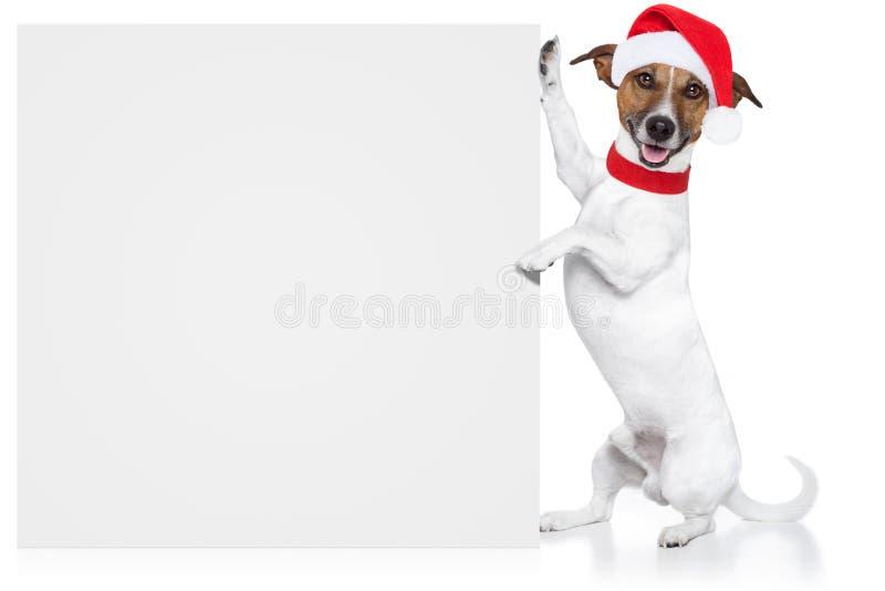 Placeholder do cão do Natal foto de stock royalty free