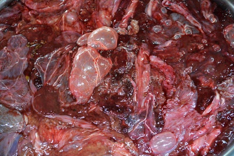 placenta bovina fotos de archivo