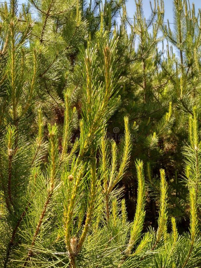 placeres del bosque fotografía de archivo libre de regalías
