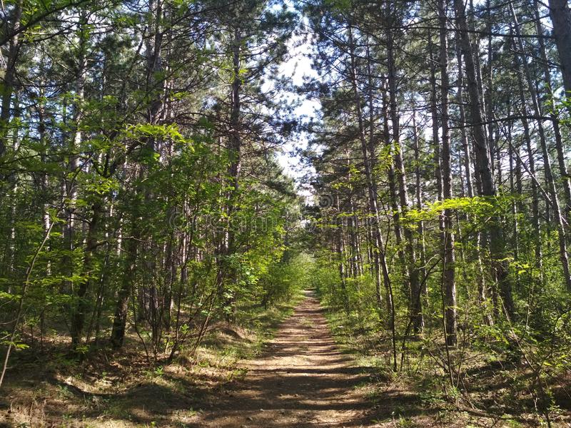 placeres del bosque imagen de archivo