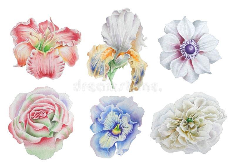 Placez avec des fleurs Rose Pivoine Lis iris anémone pensées Illustration d'aquarelle illustration stock