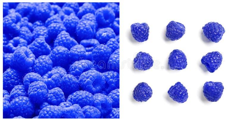 Placez avec des leucodermis bleus de Rubus de framboises photographie stock
