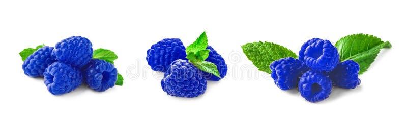 Placez avec la framboise bleue mûre fraîche sur le fond blanc photos stock