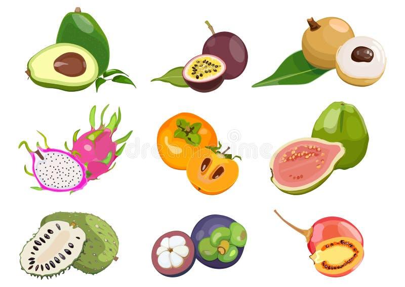 Placez de couleur, avec les fruits exotiques juteux sur le fond blanc Illustration de vecteur images libres de droits