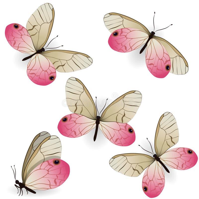 Placez de l'aurorina réaliste rose de Cithaerias de papillons ?l?ment de conception d'isolement sur le fond blanc Dessins de vect illustration libre de droits