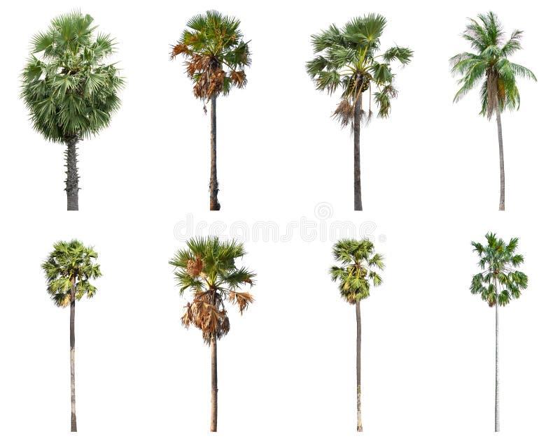 Placez de la noix de coco et des palmiers d'isolement sur le fond blanc photo libre de droits