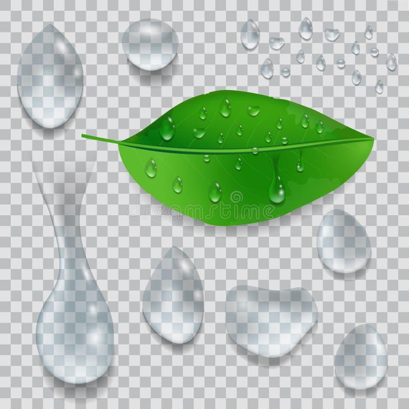 Placez des baisses de l'eau et de la feuille verte avec des baisses de rosée d'isolement sur le fond transparent Vecteur illustration de vecteur