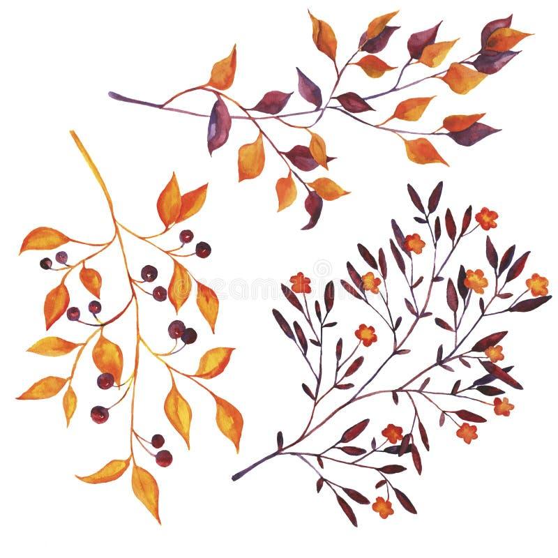 Placez des branches d'automne d'isolement sur le fond blanc Illustration tirée par la main d'aquarelle illustration de vecteur