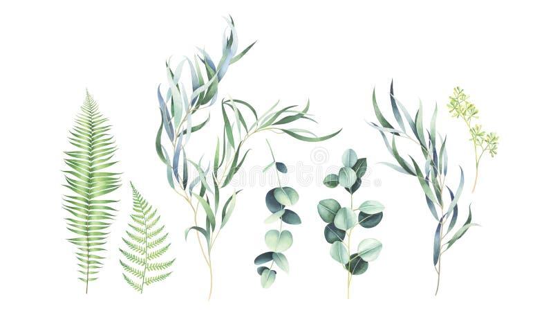 Placez des branches d'eucalyptus et de fougère d'isolement sur le fond blanc Illustration d'aquarelle illustration libre de droits