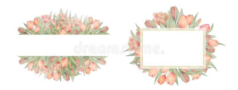 Placez des cadres de tulipes d'aquarelle Dessiné à la main Idéal pour le logo, épousant des invitations, cartes illustration stock