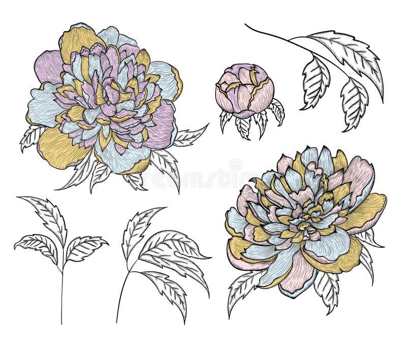 Placez des dessins détaillés de graphique de vecteur - des bourgeons et des feuilles de pivoine illustration de vecteur