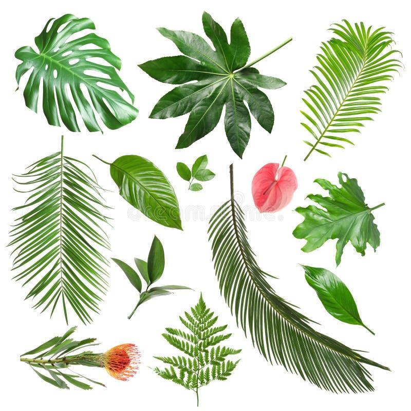 Placez des différentes feuilles et fleurs tropicales fraîches images stock