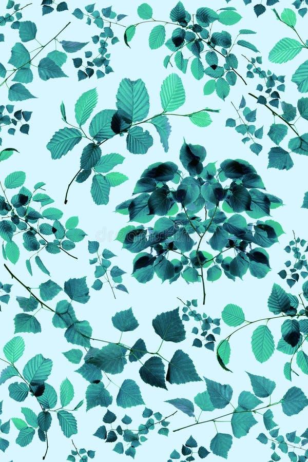 Placez des feuilles et des branches d'arbre d'essence d'isolement sur le fond vert image libre de droits