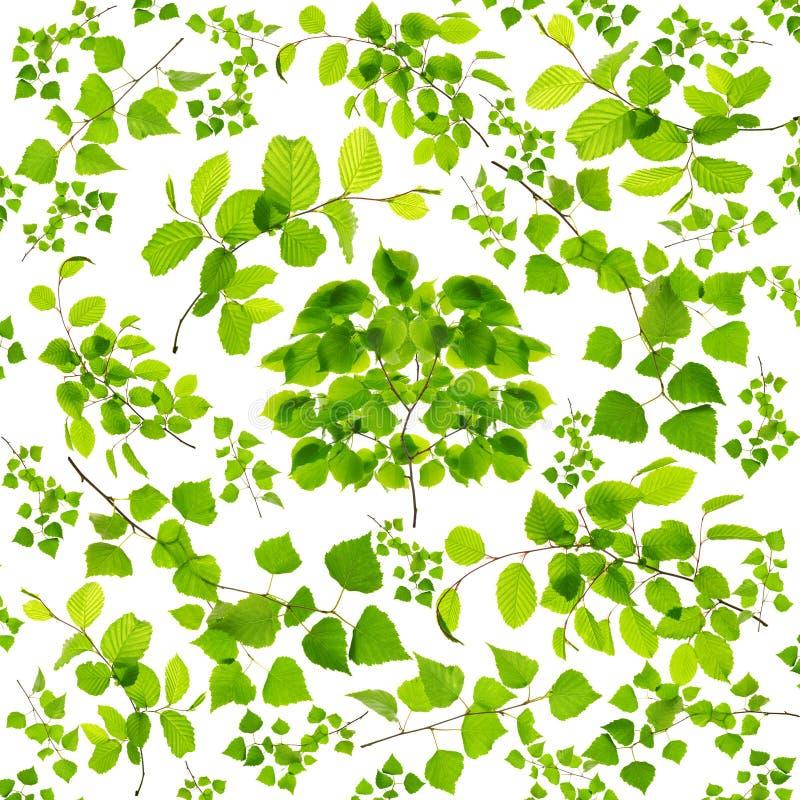 Placez des feuilles vertes et des branches d'arbre d'isolement sur le fond blanc images stock