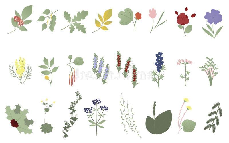 Placez des fleurs, des feuilles et des plantes Vecteur Éléments botaniques Wildflowers, herbes, feuilles, branches Collection de  illustration stock