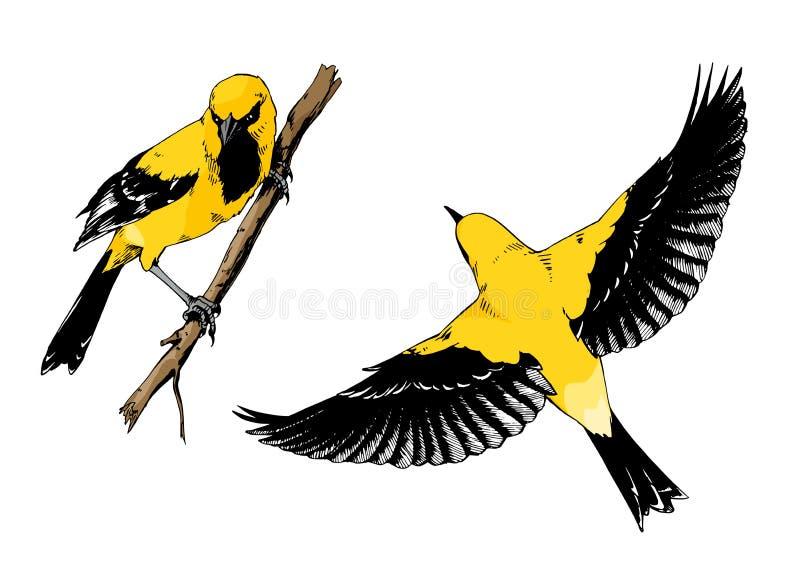 Placez des illustrations tirées par la main des oiseaux de loriot illustration libre de droits