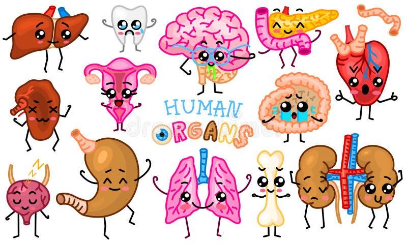 Placez des organes Caractères humains et souriants heureux mignons Goupilles de vecteur, icônes de kawaii de bande dessinée Coeur illustration stock