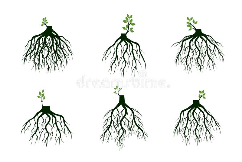 Placez des racines d'arbre et germez les membres Racines des usines Illustration de vecteur illustration libre de droits