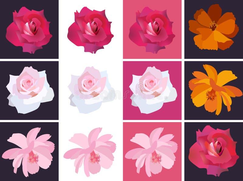 Placez des roses et des fleurs colorées de cosmos dans le vecteur Collection de belles cartes carrées de salutation ou d'invitati illustration libre de droits