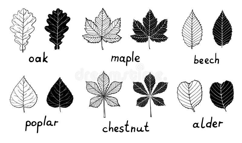 Placez des silhouettes et des feuilles d'ensemble illustration libre de droits