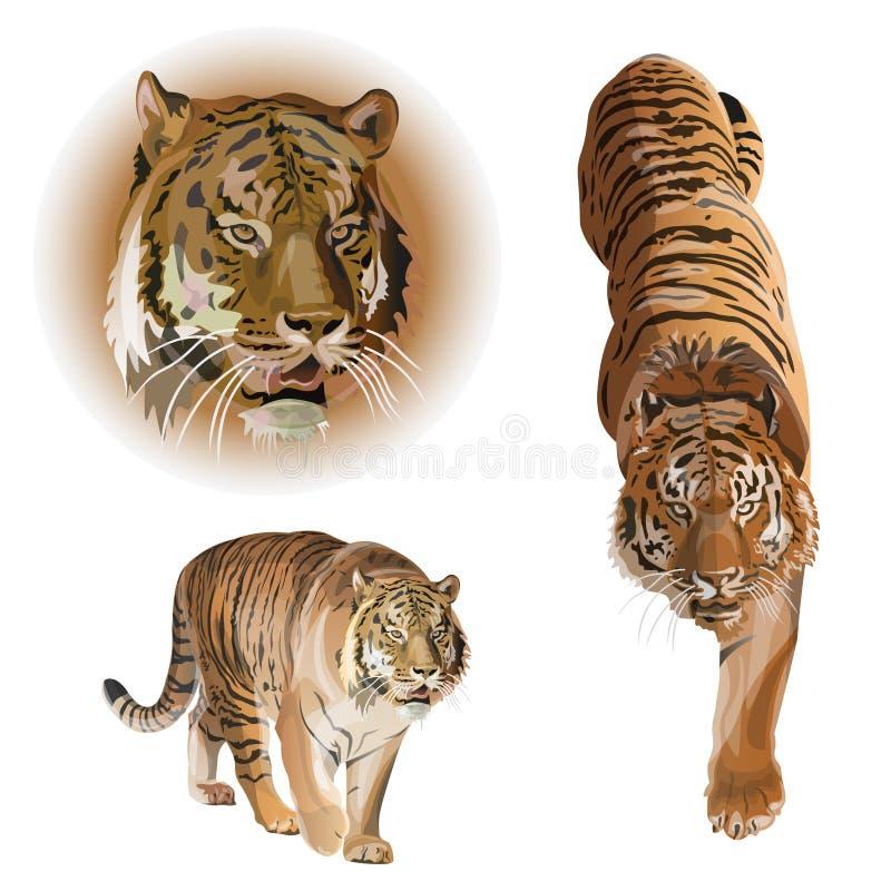 Placez des tigres de vecteur photographie stock libre de droits