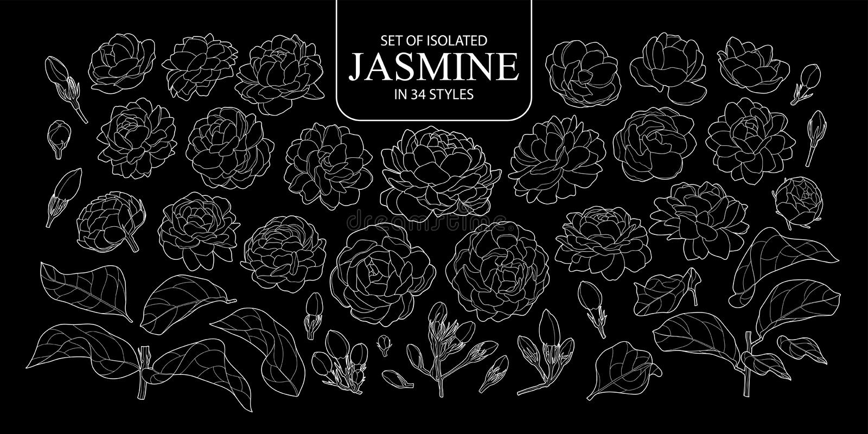 Placez du contour d'isolement du jasmin dans 34 styles photos libres de droits