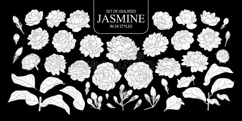 Placez du jasmin blanc d'isolement de silhouette dans 34 styles photographie stock