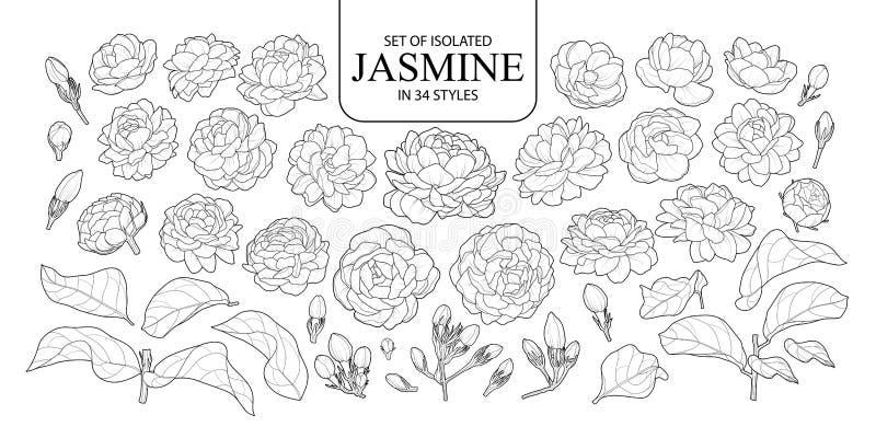 Placez du jasmin d'isolement dans 34 styles image libre de droits