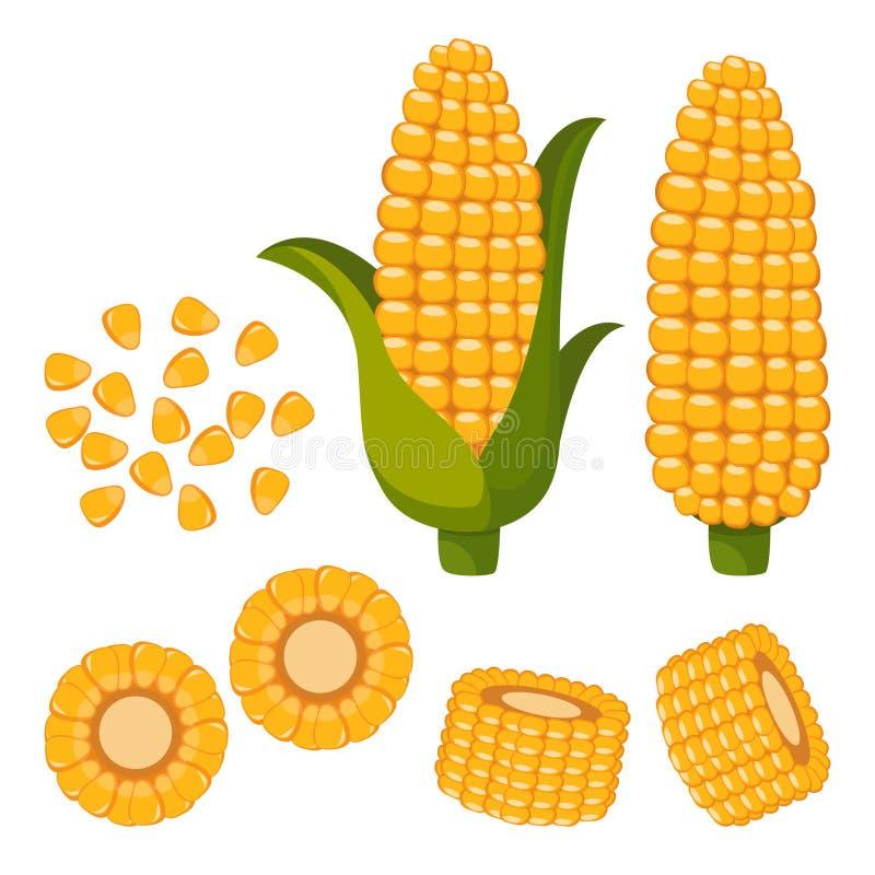 Placez du maïs mûr, des moitiés et des grains dans différents angles sur un blanc illustration de vecteur