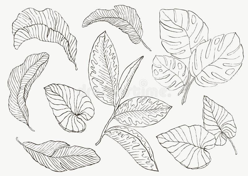 Placez la feuille exotics Illustration botanique de vecteur de vintage illustration libre de droits