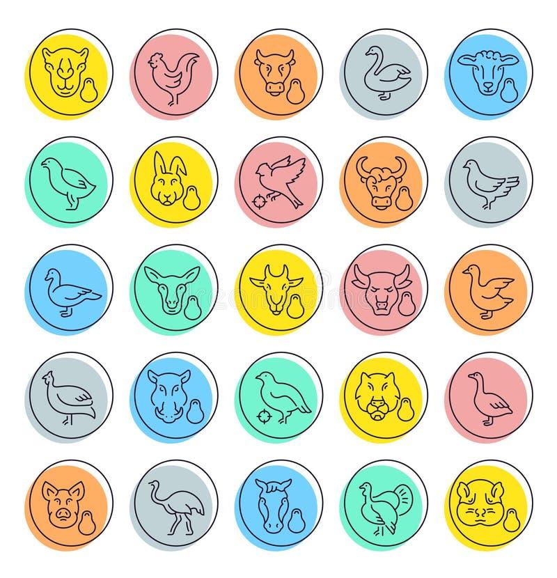 Placez la ligne icônes de vecteur de la viande et de la volaille illustration libre de droits