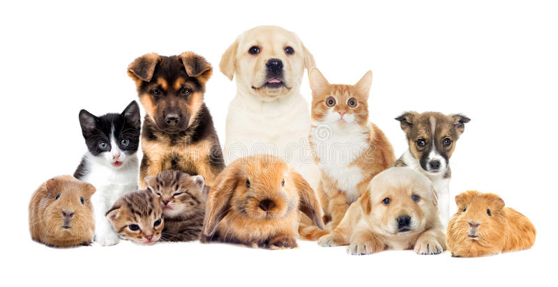 Placez les animaux familiers photo libre de droits