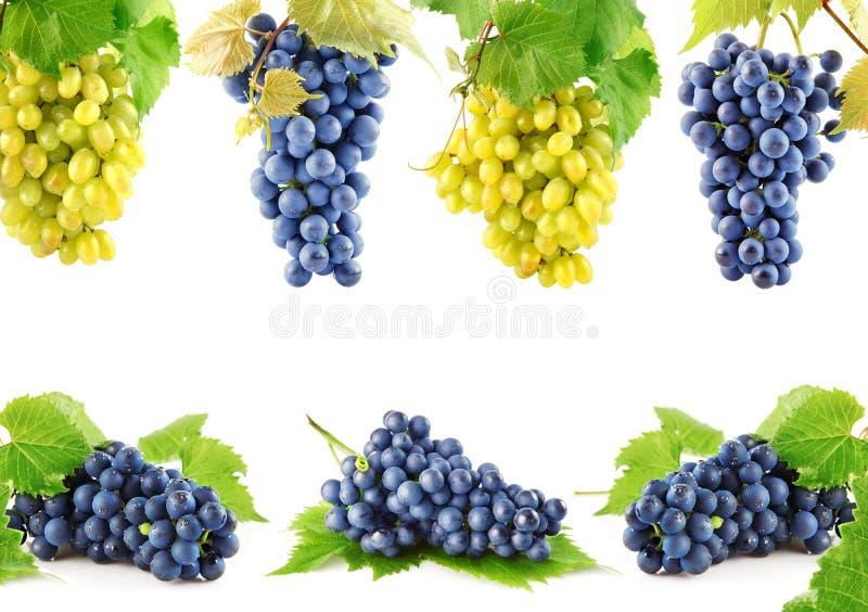 Placez les fruits bleus et jaunes de raisin avec des lames photos libres de droits