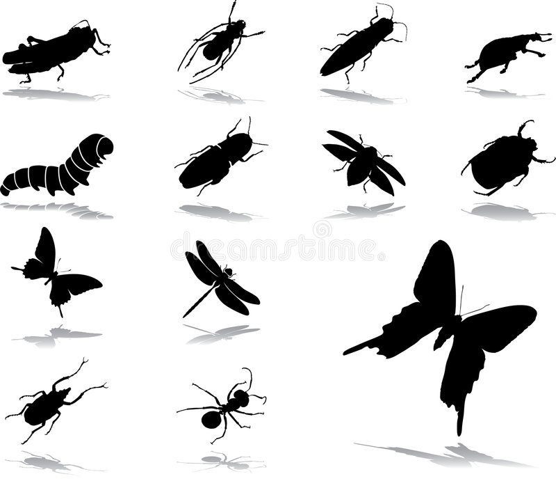 Placez les graphismes - 37. Insectes