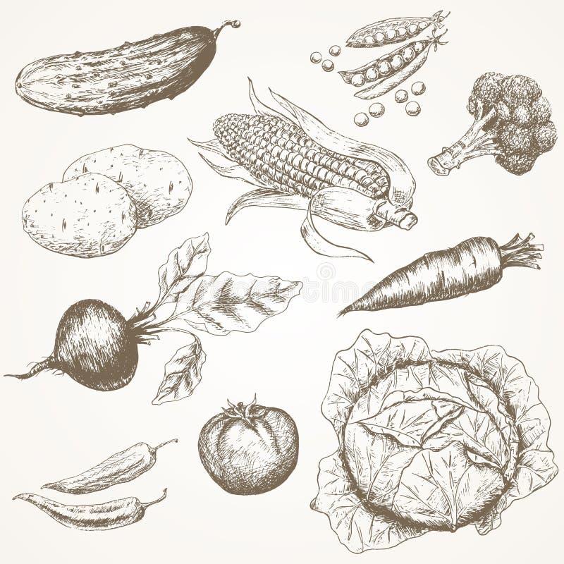 placez les légumes illustration de vecteur