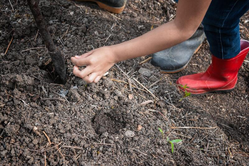 Placing the seed in the ground for harvest. Hand placing carrot, tomato and paprika seeds in the ground for harvest, located in Venezuela in the Tachira State royalty free stock images