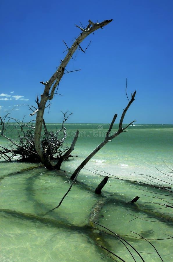 Plage 3 scéniques de la Floride photographie stock libre de droits