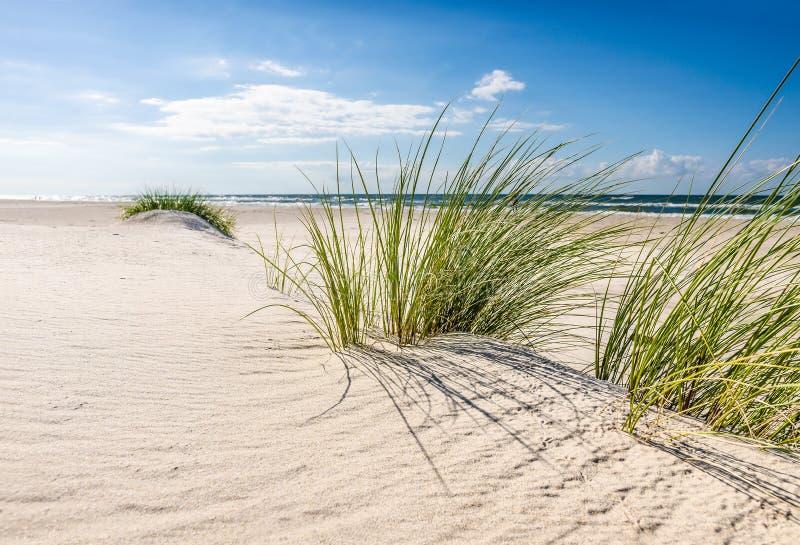 Download Plage photo stock. Image du herbe, nuages, baltique, bleu - 77161680