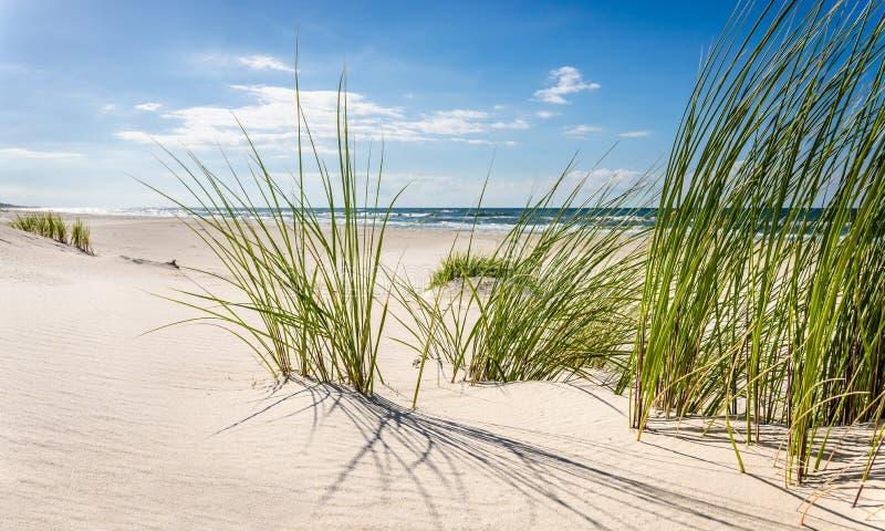 Download Plage image stock. Image du côte, herbe, baltique, ciel - 77162349