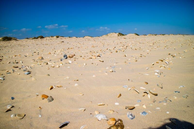 Plage avec beaucoup de coquillages sur le bord de la mer en île du sud d'aumônier, le Texas photos stock