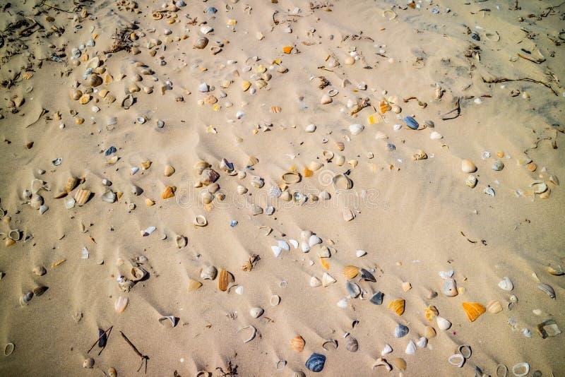 Plage avec beaucoup de coquillages sur le bord de la mer en île du sud d'aumônier, le Texas image stock